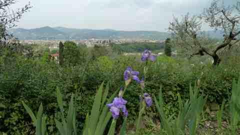 Giardino dell 39 iris una piccola oasi di pace a firenze - Giardino dell iris firenze ...