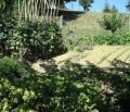 Agricoltura e scuola: gli studenti toscani scelgono la campagna