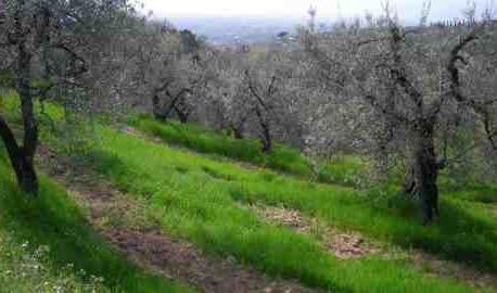 Agricoltura Toscana: 2014 anno da dimenticare
