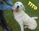 Animali Firenze: centinaia richieste di adozione per il cucciolo Binario